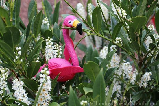 pink flamingo in garden