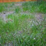 Mavis Butterfield   Backyard Garden Plot Pictures 9/13/15