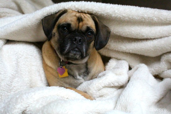 lucy puggle
