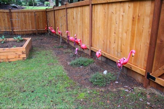 flamingos thyme plants