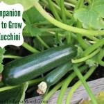 10 Companion Plants to Grow with Zucchini