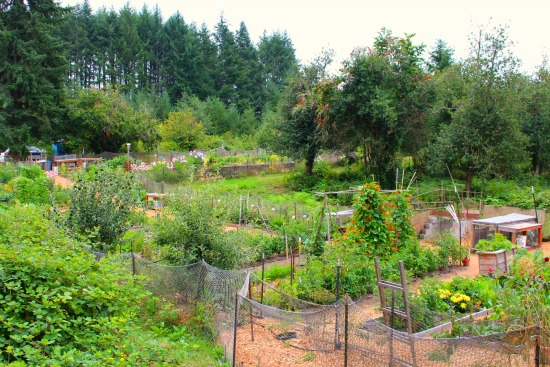 Wilkinson Farm Community Garden