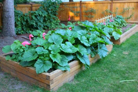 garden boxes 2