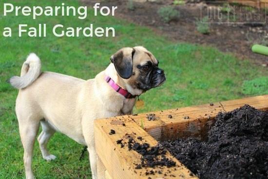 Preparing-for-a-Fall-Garden