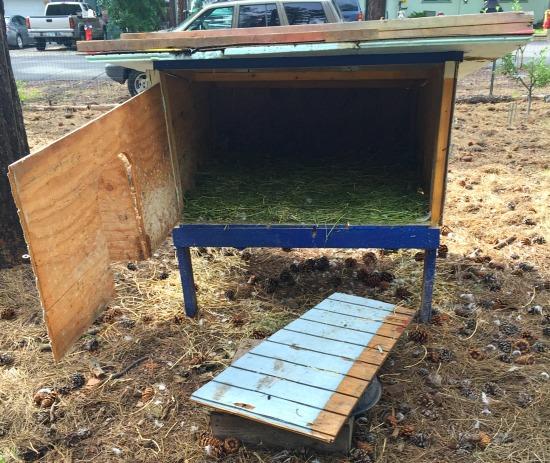 chicken coop from scratch