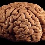 14599057254_6084693b0e_brain