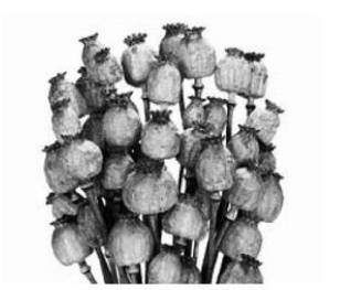 De hele wereld van Hogewoning Dried Flowers