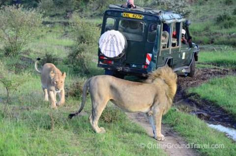 Kicheche 4x4 and a few lions