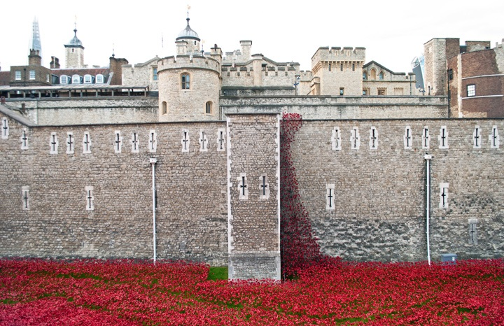 Remembrance poppies