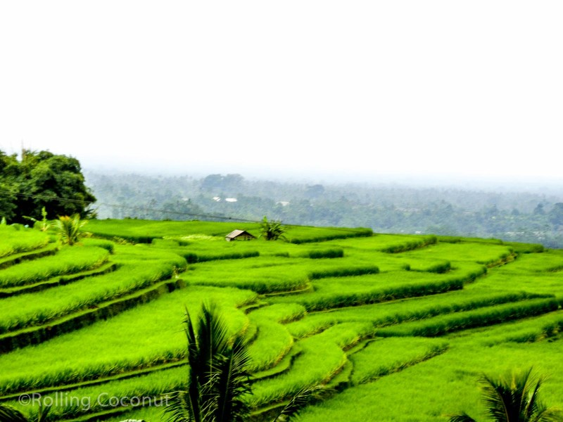 Jatiluwih Rice Terraces Landscape Bali Indonesia photo Ooaworld