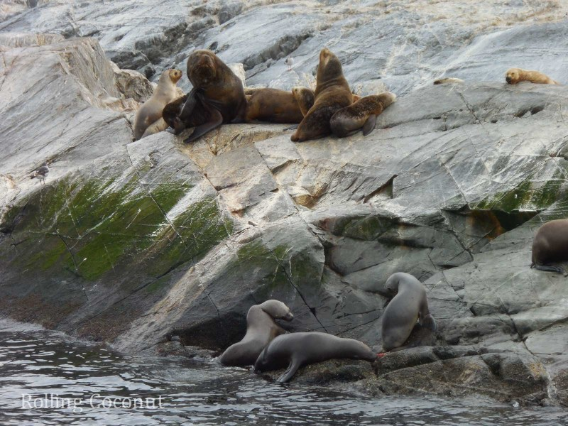 Ushuaia Argentina Sea Lions Island Beagle Channel ooaworld Rolling Coconut Photo Ooaworld