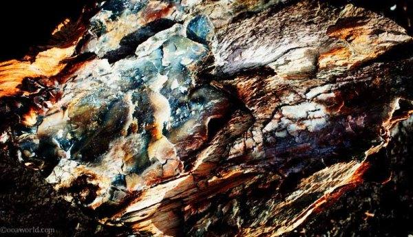 Petrified Wood texture, Painted Desert, Arizona