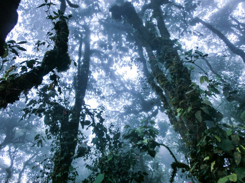 Trees Mossy Forest Cameron Highlands Malaysia photo ooaworld Rolling Coconut