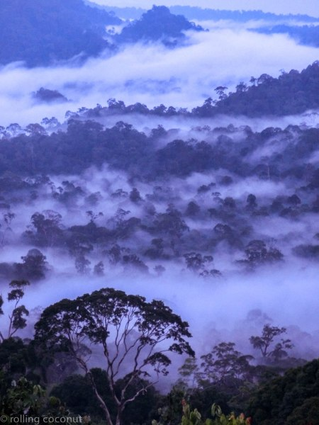 Fog Danum Valley Borneo photo ooaworld Rolling Coconut