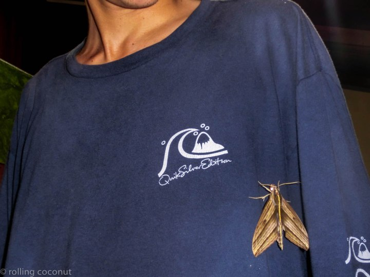 Moth Danum Valley Borneo photo ooaworld Rolling Coconut