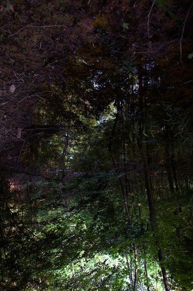 Natchez woods texture