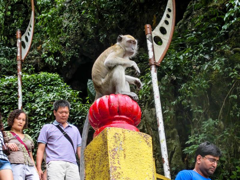 Monkey Batu Caves photo ooaworld Rolling Coconut