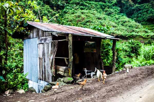 stick shack batad rice terraces photo ooaworld Rolling Coconut