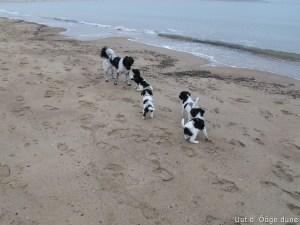 met zijn alle naar het strand