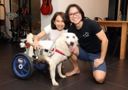 Small Of Dog Wheelchair Diy