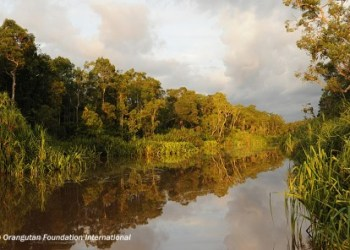 Sekonyer River in Tanjung Puting National Park