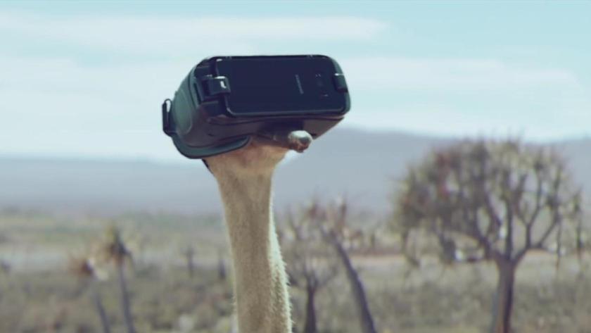 Samsung-Ostrich-1080p-2
