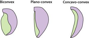 brachiopod shell typeshorz