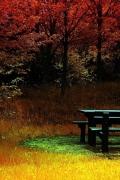 natura-autunno-sfondo-iphone