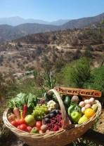 Canasta de Frutas y Verduras a Domicilio – Abeja