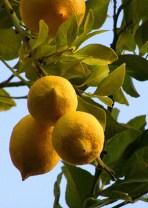 El Limón Orgánico