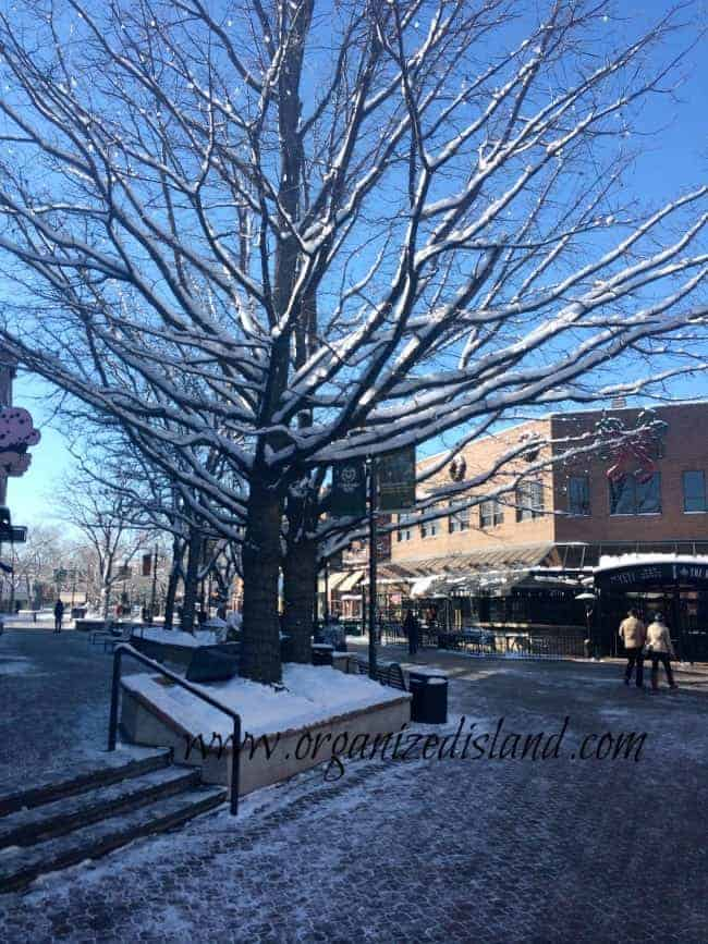 Visiting Downtown Fort Collins Colorado