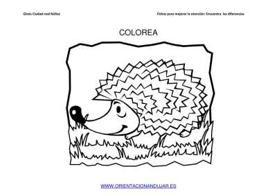 COLOREAMOS DIBUJOS DE ERIZOS IMAGENES_08