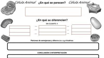 COMPARA CONTRASTA CÉLULA ANIMAL CÉLULA VEGETAL