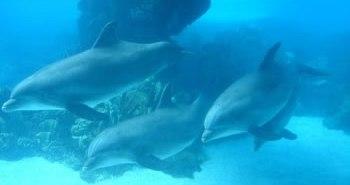 écologie sous-marine