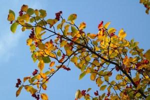 leaves-228132_640