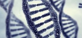 Memories Passed Down In Genes From Ancestors