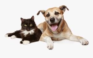 cane e gatto visti di fronte in posizione sternale