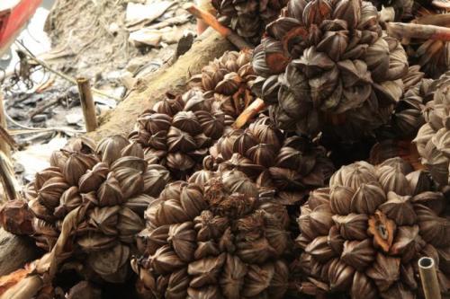 water-coconut:  dua-nuoc