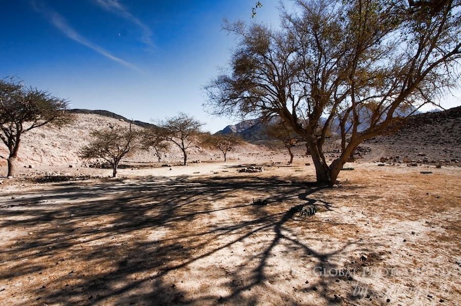 Jordan tree shadow