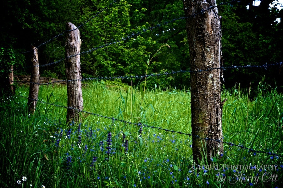 purple flowers around a fence pole