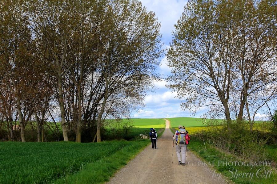 Camino de Santiago picture