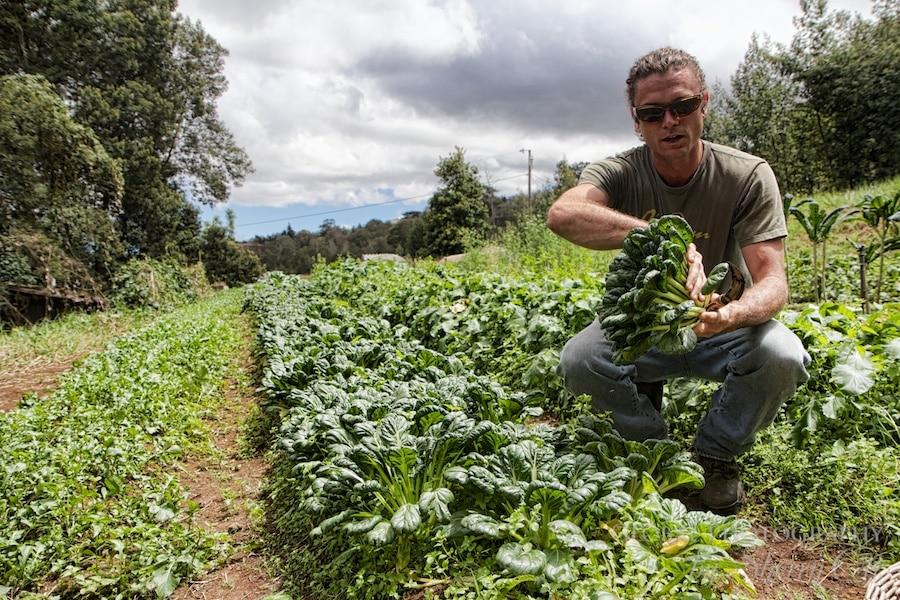 Oo Farms gardens organic maui