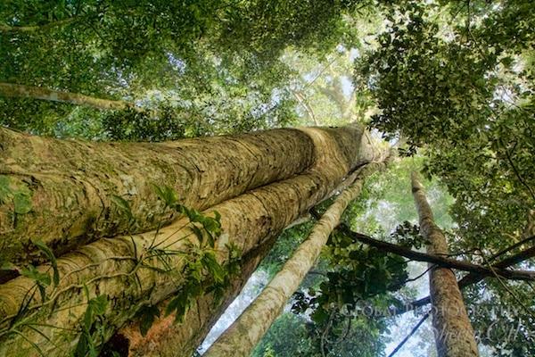 peru jungle trekking
