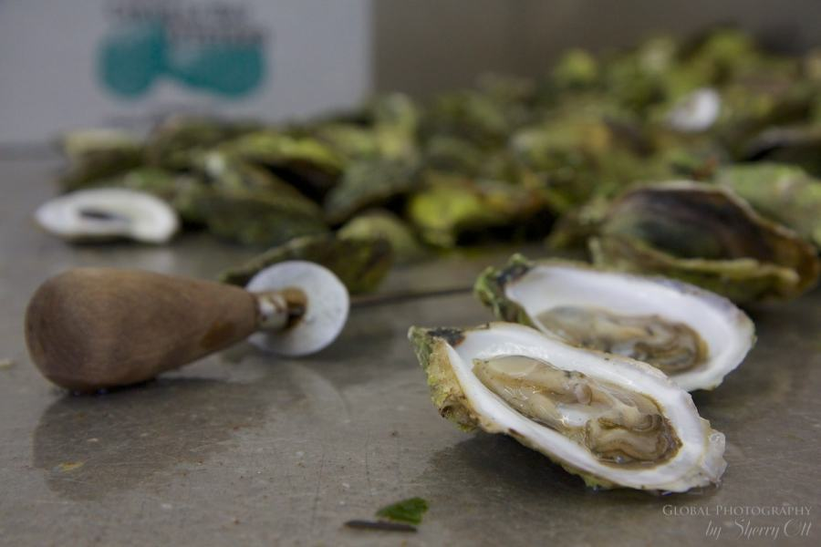 Colvill Bay Oysters PEI