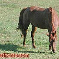 Should you buy a horse?