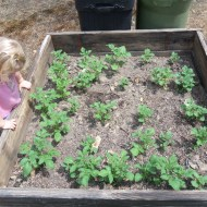 Gardening Update: Growing Potatoes in Upcycled Garbage Cans