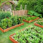 The Benefits of Companion Gardening & Free Gardening Journal