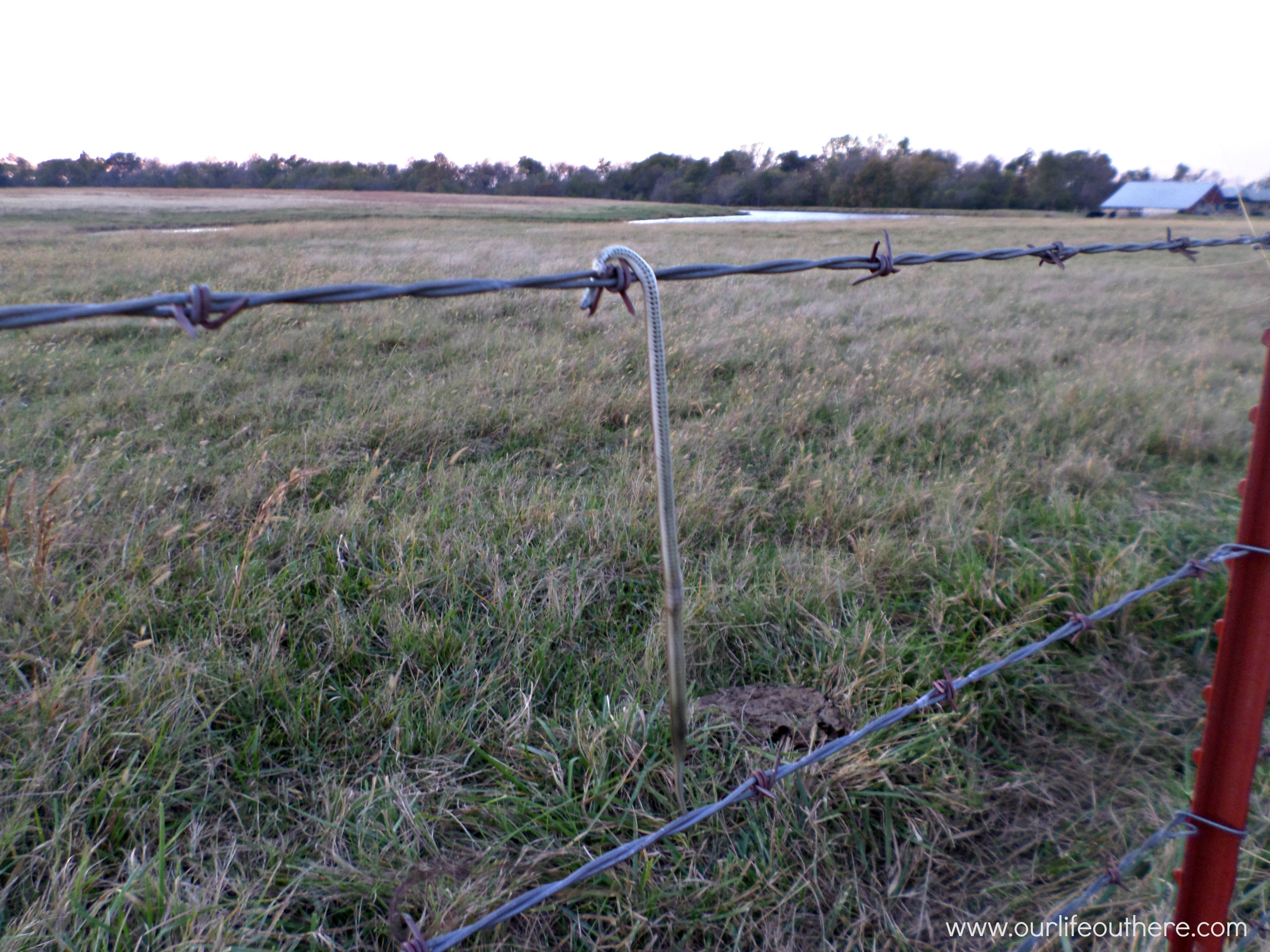 barbed wire fence Archives -
