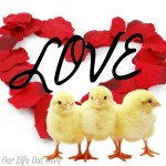 Any chicken mom would love these gifts! #chickens