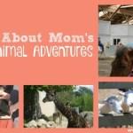 OAAM's Top Animal Adventures